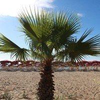 Club Esse Sunbeach spiaggia in concessione 4